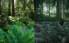 seattle native plants the last of us part ii u0027s setting may have been uncovered by clever