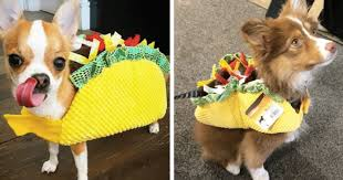 Taco Costume 12 Doggy Tacos That Make Mexican Food Adorable