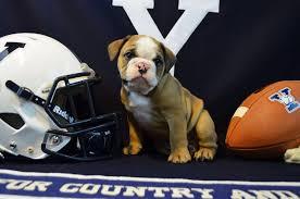 Yale Flag Yale Welcomes Handsome Dan Xviii