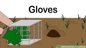 4 ways rid groundhogs wikihow
