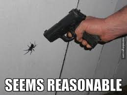 Meme Spider - some crazy facts statistics funny spider crazy facts and funny