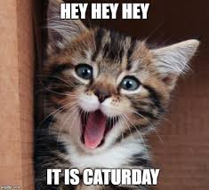 Caturday Meme - happy cat imgflip