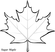 leaf printable coloring pages leaves fall leaves and craft