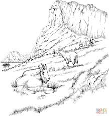 sheep coloring pages arterey info