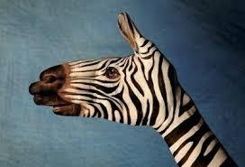 tattoos revolution zebra tattoos