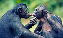 siege social bonobo jeffery travels travel tourism taxi services