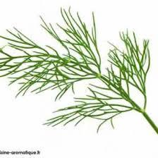 herbes cuisine cuisine aromatique aromatiques essentiels herbes cuisine aromatique