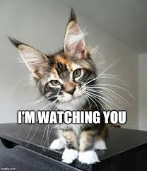 I M Watching You Meme - i m watching you imgflip