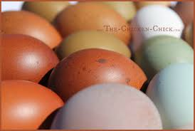 Backyard Laying Chickens by The Chicken Decrease In Egg Production Causes U0026 Solutions