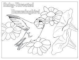 hummingbird color appliques hummingbird