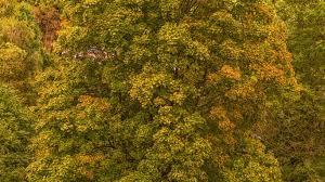 download wallpaper 1366x768 trees autumn foliage laptop 1366x768