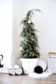 real christmas tree in a pot christmas lights decoration