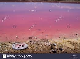 Pink Lake Hutt Lagoon At Port Gregory Near Kalbarri Also Called Pink Lake