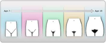 pictures of thick pubic hair pubic hair development