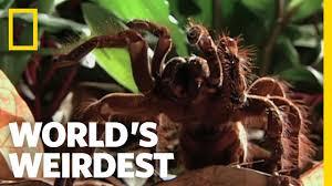 b spiders lessons tes teach