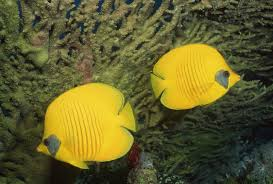 antibiotic resistance is a problem for the ornamental fish