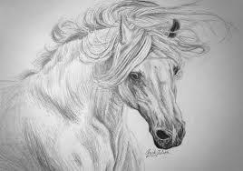 white horse sketch by christa s nelson on deviantart