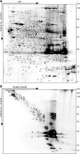 quantitative and integrative proteome analysis of peripheral nerve