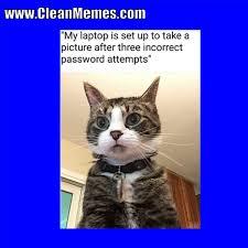 Clean Cat Memes - cat memes clean memes the best the most online page 3