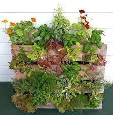 vertical vegetable garden vertical garden neat ideas
