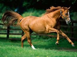 equine jones feed mills ltd