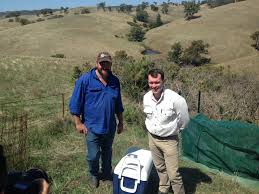 native plants adelaide hopes for gorse control in barossa natural resources adelaide