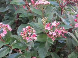 winter flowers and scents fieldcrest garden