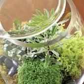 plant a beautiful terrarium midwest living