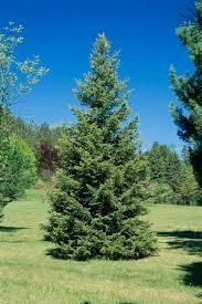 Canadian Garden Zones - good trees to grow in zone 3