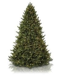 balsam hills trees the bh balsam fir was named christmas winter
