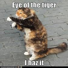 Eye Of The Tiger Meme - eye of the tiger i haz it lolcats lol cat memes funny cats