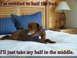 Dog In Bed Meme - 9 realities of sharing a bed with your dog barkpost