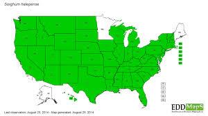 edd maps johnsongrass sorghum halepense eddmaps state distribution