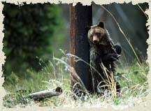 Are Bears Color Blind A Complete Guide To The Two Specie Of Bear That Inhabit