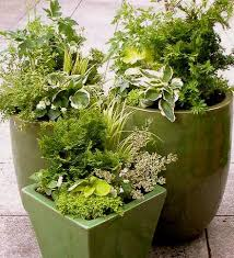 Winter Container Garden Ideas Sticks For Decorative Container Garden Acres Farm