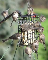 California Backyard Birds by Attract Birds To Your Backyard This Winter Audubon California