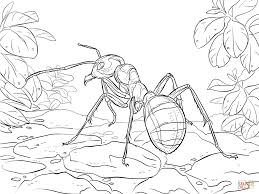 red wood ant coloring page free printable coloring pages