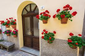 windows and doors in an house decorated with flower stock