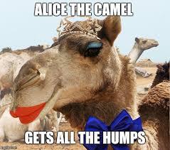 Camel Meme - ba dum dum dum imgflip