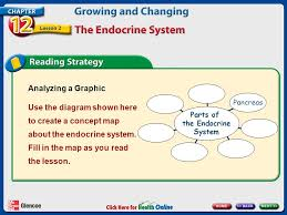 endocrine system concept map chapter 12 growing and changing lesson 2 the endocrine system