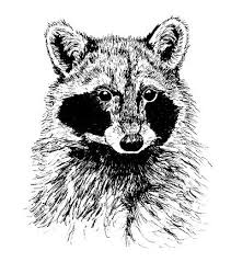 drawing animals in pen and ink samantha bell
