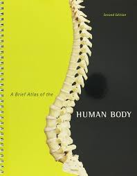 human anatomy u0026 physiology books a la carte edition modified