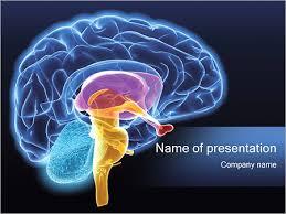 templates for powerpoint brain brain powerpoint templates brain powerpoint templates human brain