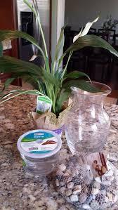 Betta Fish Vase With Bamboo 8 Betta Fish U0026 Flower Vase 4 Steps