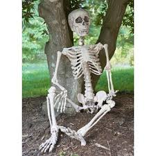 posable skeleton posable skeleton wayfair