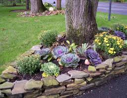 impressive ornamental cabbage decorations to beautify your outdoors