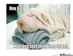 Funny Puppy Memes - dog memes funny pictures with dogs and puppy
