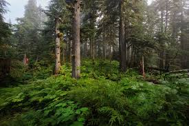 Alaska forest images Photograph coastal rain forest wrangell alaska