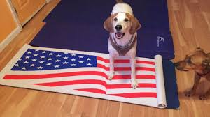 Our Flag Doggone Healthy Choices Blogdoggone Healthy Choices