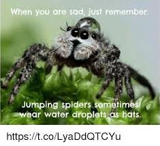 Funny Spiders Memes Of 2017 - jumping spiders sometimes water droplets hats jumping spider meme
